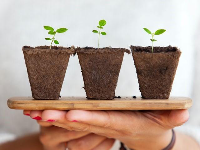 Person holding three plants symbolising growth